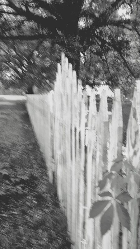 Black And White Photography Black And White Old Whitewashed Wooden Fence Black And White Wooden Fence Fence Photography Country Life Old White Paint Pealing Paint Times Gone By Fence Gate Outdoor Photography Focus On Foreground Outdoor Pictures Yard Equipment Old Road Spooky Atmosphere Spooky Trees Country Living Out Of Focus Blurred Photography Times Past Country Road