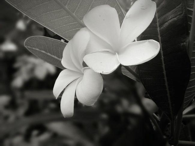Flower Feeling Down Blackandwhite