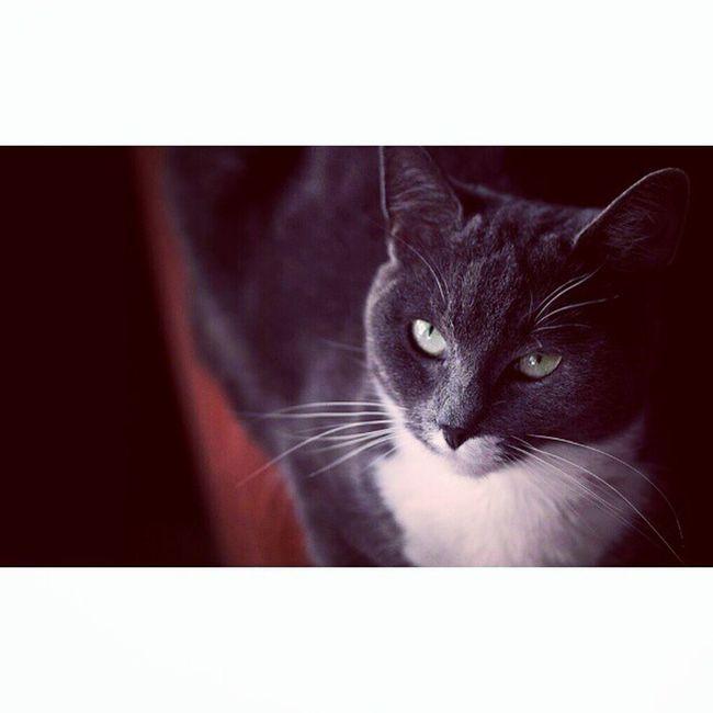 My lovely cat! Lucasphotography Cute Cat Instamood picoftheday instadaily instacats