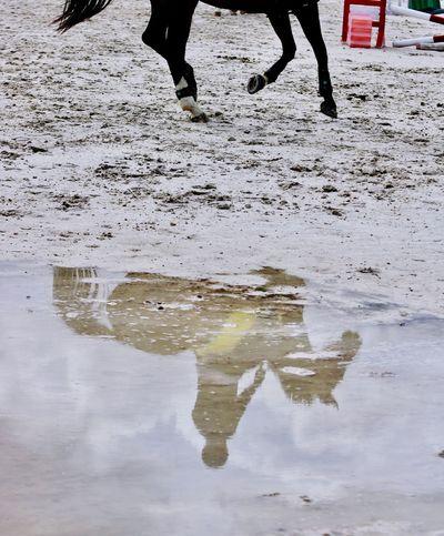 Reflejo. Réflexion Horse Canon Hipica Caballo Canonphotography Madrid Photography Photographer Fotografia Fotografo