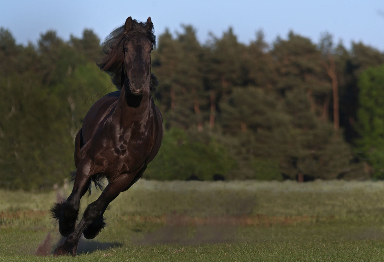 One Animal Looking At Camera Grass No People Full Length Outdoors Pferd Pferdefotografie Horse Photography  Niedersachsen Celle Hannover Horse Animal Action Action Shot  Rennen Galopp Trab Rappe