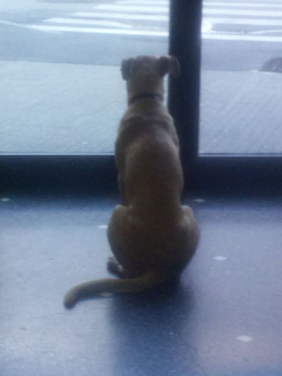 The Dog Family Animal Themesd Domestic Animals