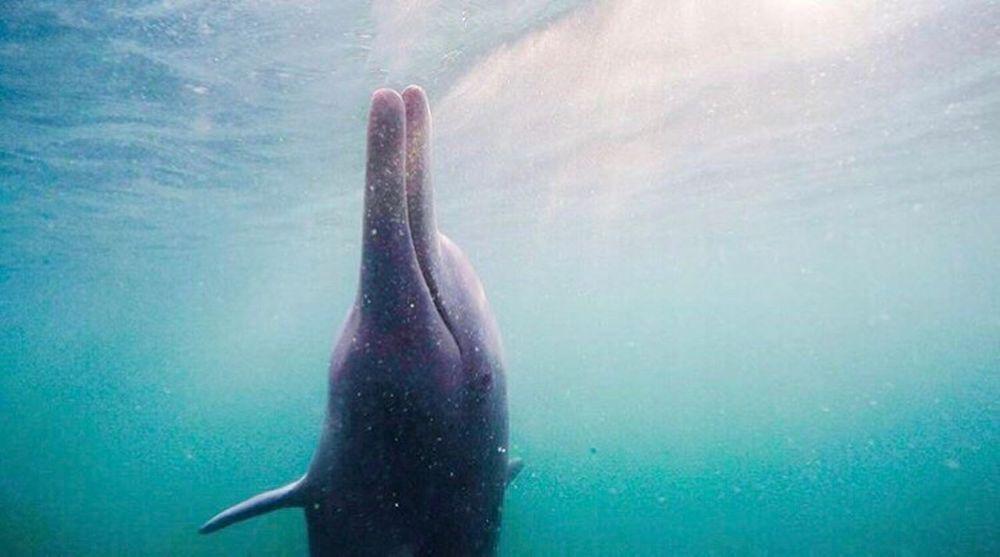 Dolphin One Animal Animals In The Wild Animal Wildlife Animal Themes Underwater UnderSea Swimming Sea Life Aquatic Mammal Dolphins Dolphin Queensland Brisbane Australia Australian Landscape Stradbroke Island
