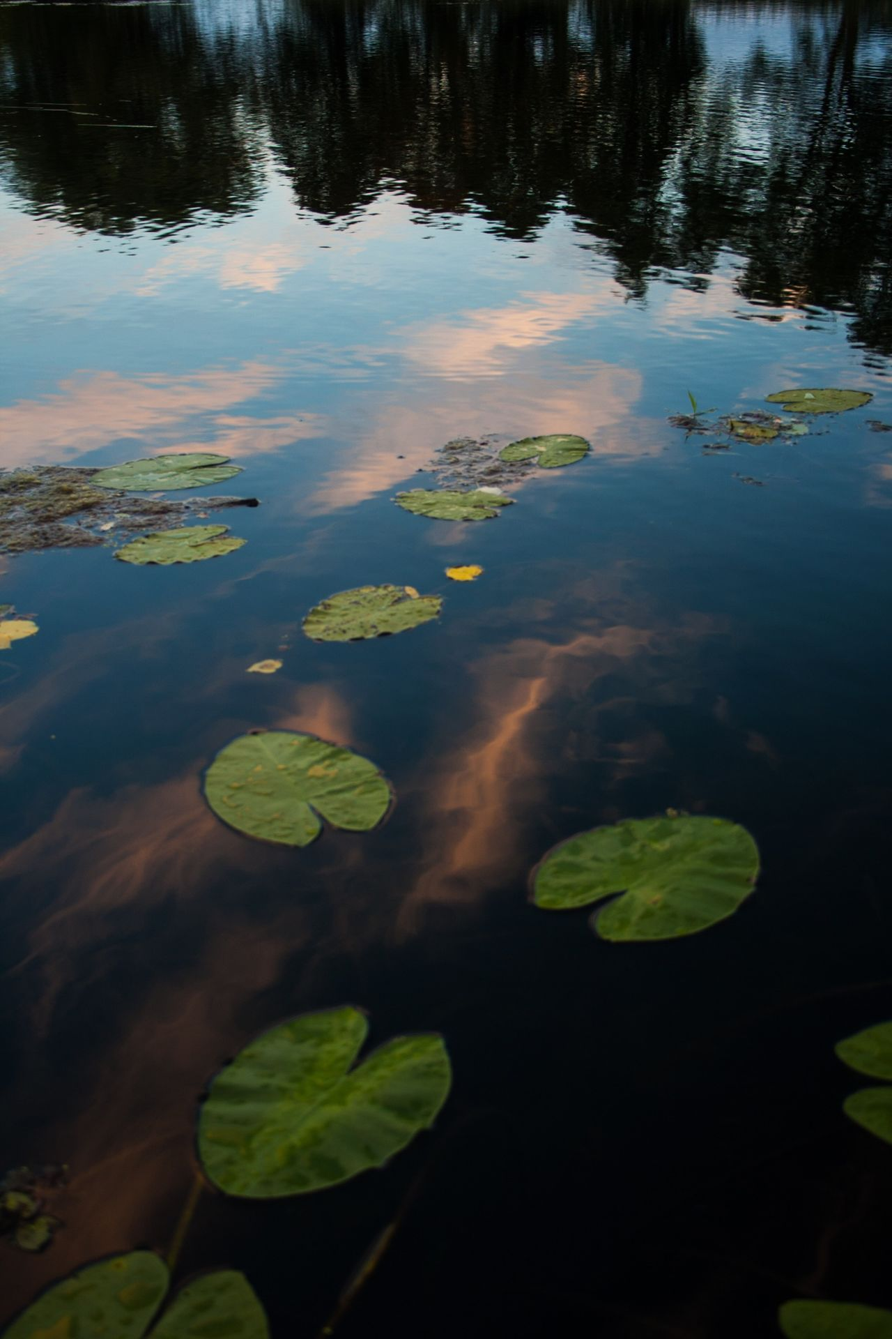 Beautiful stock photos of peace, Besitz, Day, Floating On Water, Germany