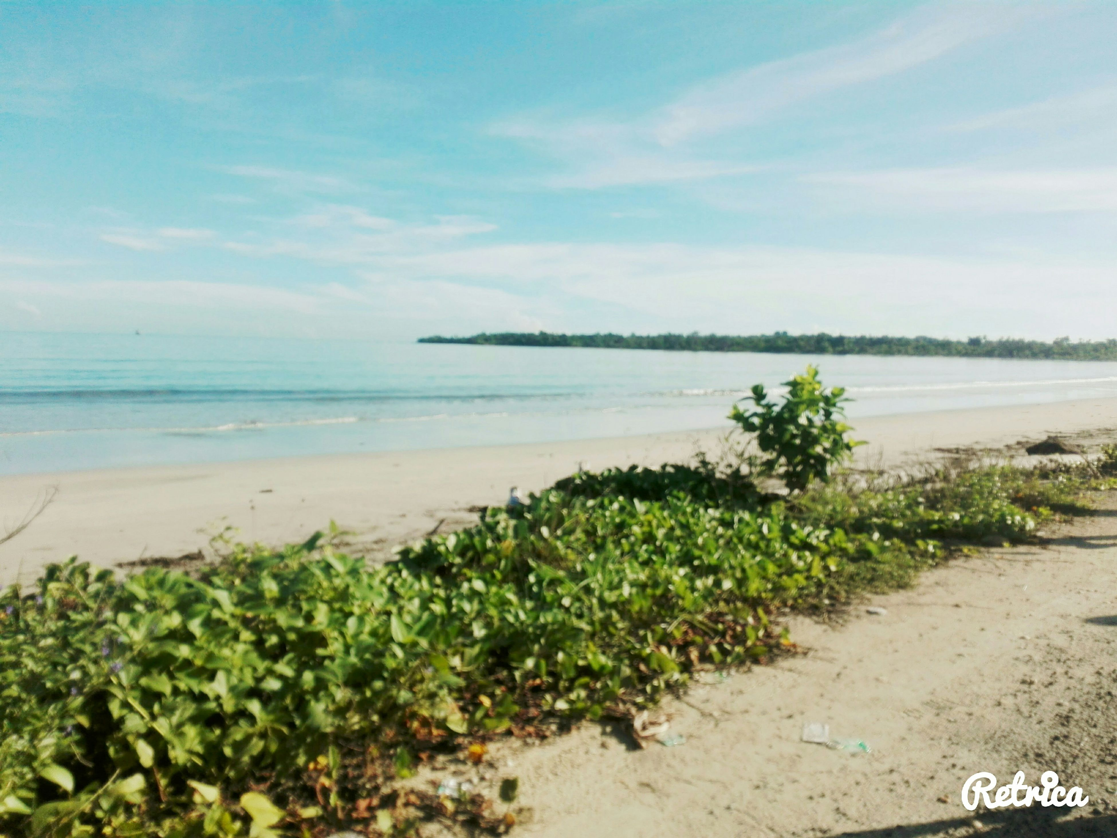 water, sea, beach, tranquil scene, tranquility, sky, scenics, horizon over water, nature, beauty in nature, shore, plant, sand, growth, grass, idyllic, coastline, day, tree, outdoors