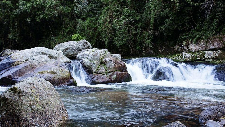 Ribeirao, Apiúna pedras, Arvores