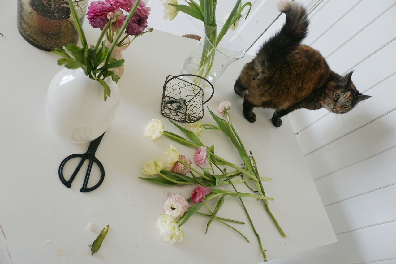 Making a bouquet of flower and hit some help from my cat Animal Themes Beauty In Nature Bouquet Bouquet Of Flowers Cat Cats Curiosity Curious Day Flower Flower Collection Flower Head Flowerporn Flowers Flowers, Nature And Beauty Fragility Freshness Growth Indoors  Nature No People Plant Work Space Working
