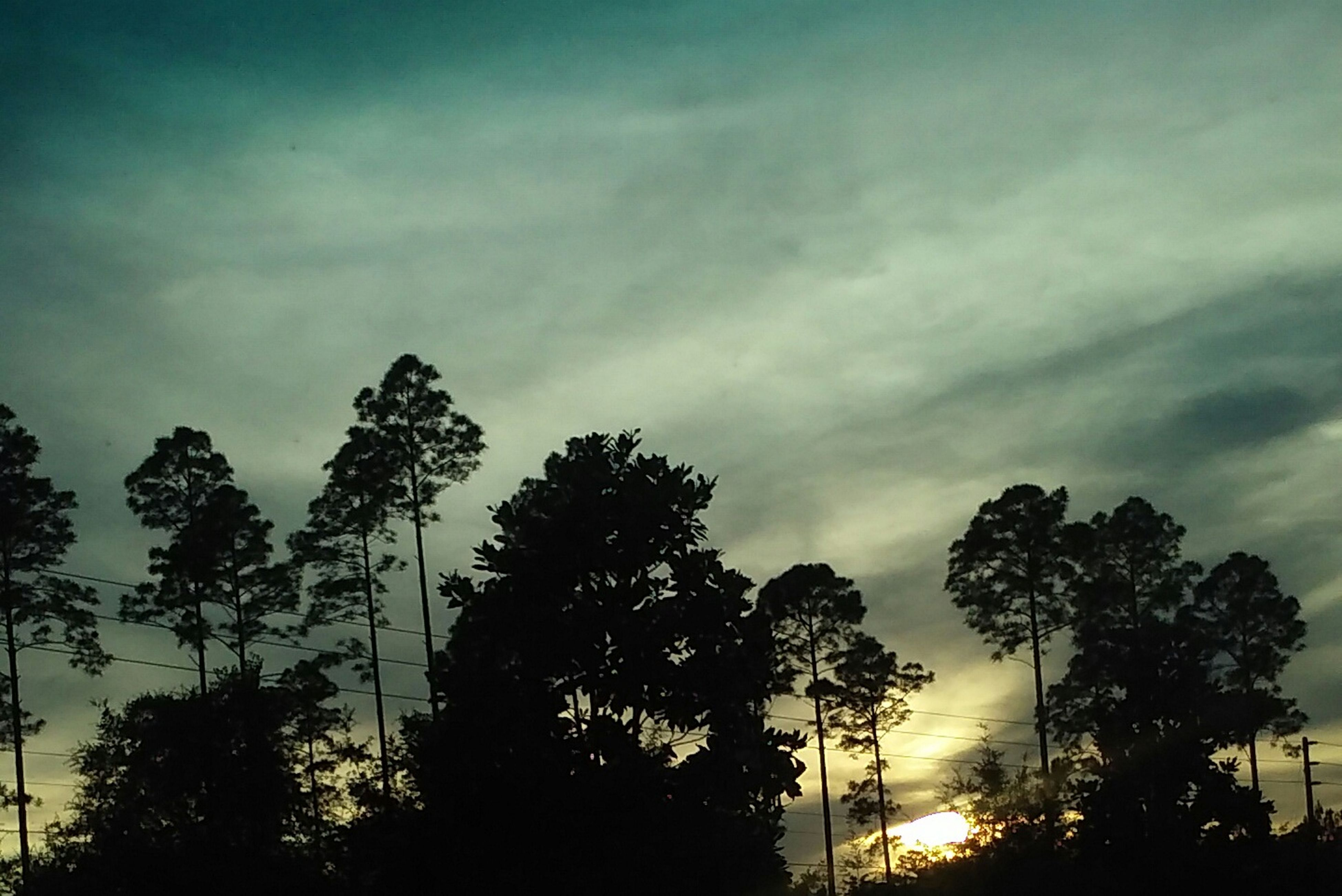 tree, silhouette, sky, low angle view, cloud - sky, tranquility, beauty in nature, cloudy, nature, tranquil scene, scenics, growth, sunset, cloud, dusk, branch, outdoors, no people, overcast, idyllic