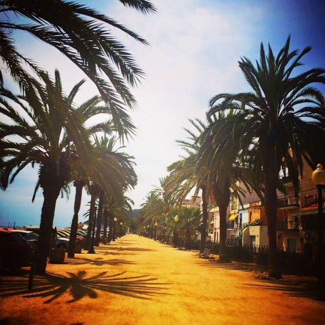 Hanging Out Check This Out Taking Photos Seasexandsun Beachphotography Enjoying Life Palm Trees SPAIN Summertime