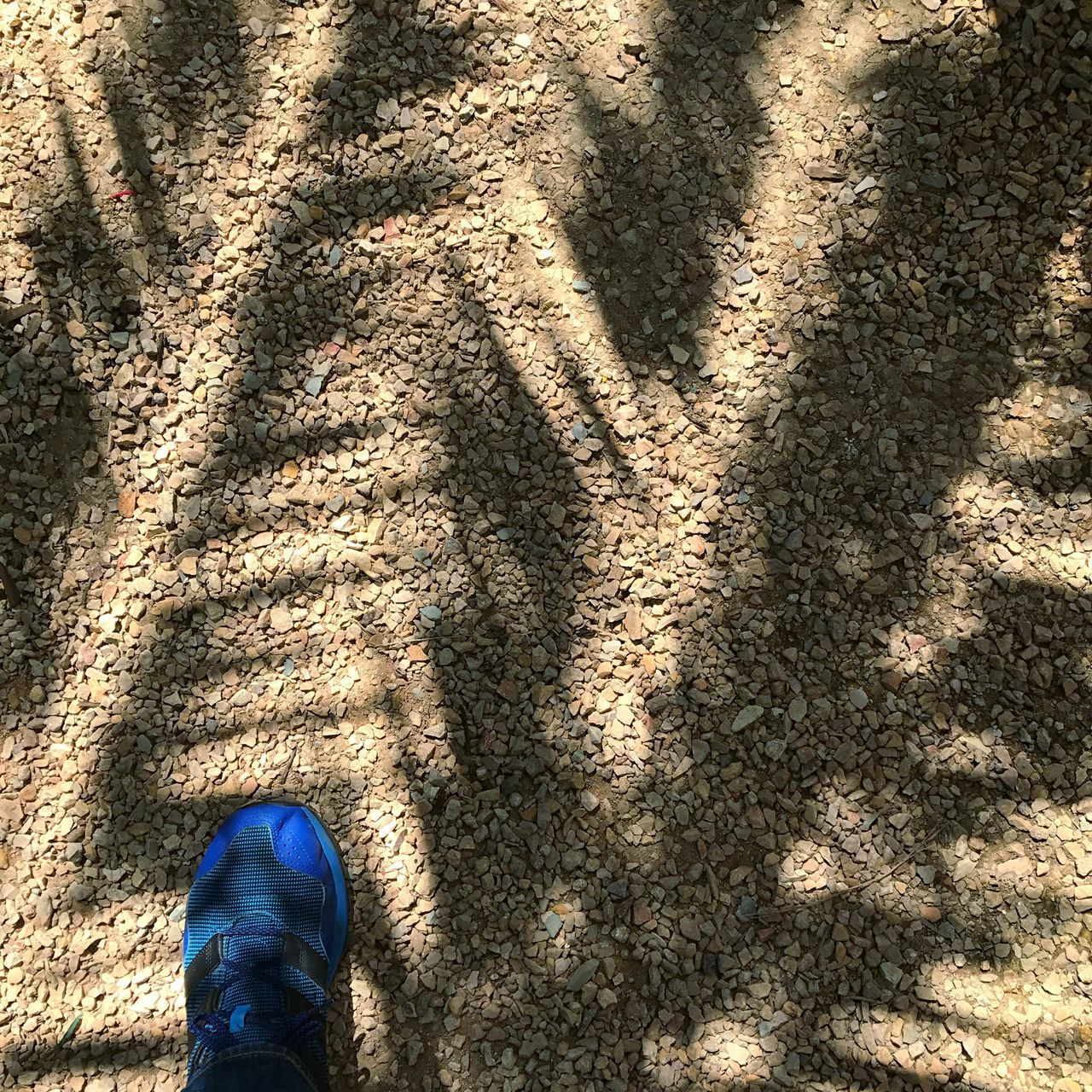 Shadow High Angle View Sunlight Low Section Shoe Human Leg Day Real People Standing Outdoors Men One Person Human Body Part Lifestyles Adult People Out Of The Box Open Edit Adidas Electric Blue Sneakers