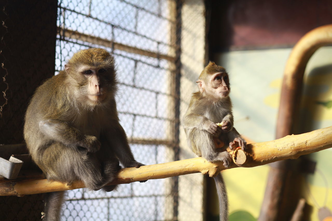Monkey With Infant In Cage At Zoo