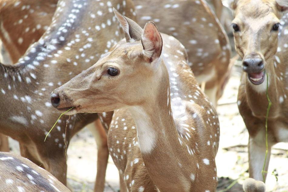 Beautiful stock photos of deer, Animal Body Part, Animal Head, Animal Pattern, Day