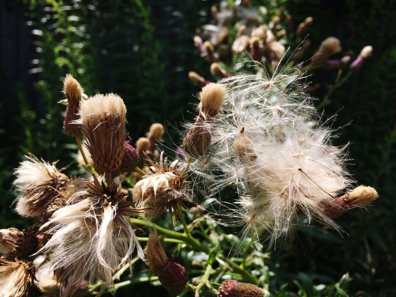 Chwasty Natura Przyroda Kwiaty Katowice