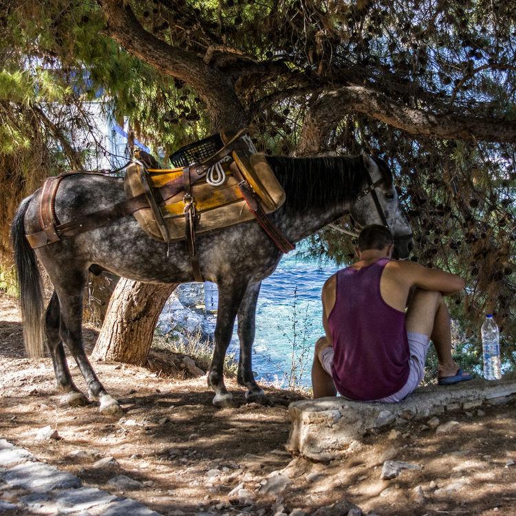 Siesta Donkey Island Life Mediterranean Sea Siesta Ýdra, Greece