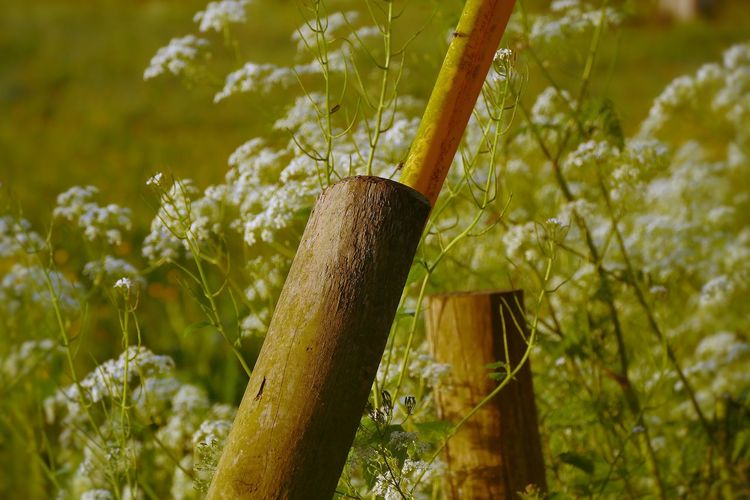 Growth Day Nature No People Outdoors Green Color Tree Close-up Plant White Flowers Fence Posts A Frame BYOPaper! The Great Outdoors - 2017 EyeEm Awards Place Of Heart Perspectives On Nature