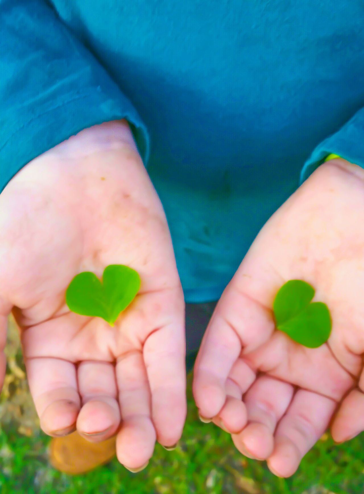 Human Hand Human Body Part Close-up Environmental Issues Holding Green Color People Outdoors One Person Day Clover Clover Leaf Good Luck Luck Of The Irish Shamrocks Shamrock Green Leaf Nature Lover Love Heart Heart Shape Palm Palm Of Hand Showing Playing Outside