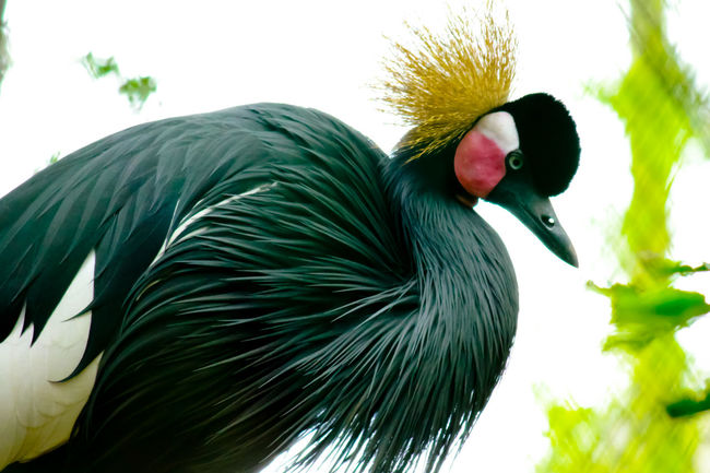 Beak Beauty In Nature Close-up Day Feather  Focus On Foreground Growth Nature No People Outdoors Picock Sky