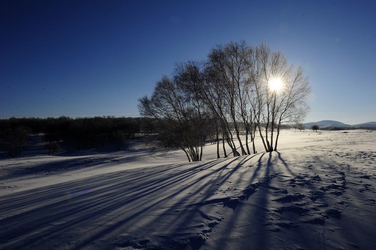 snow, winter, cold temperature, nature, beauty in nature, clear sky, tranquility, tree, outdoors, scenics, tranquil scene, sunlight, landscape, bare tree, sun, field, no people, sky, blue