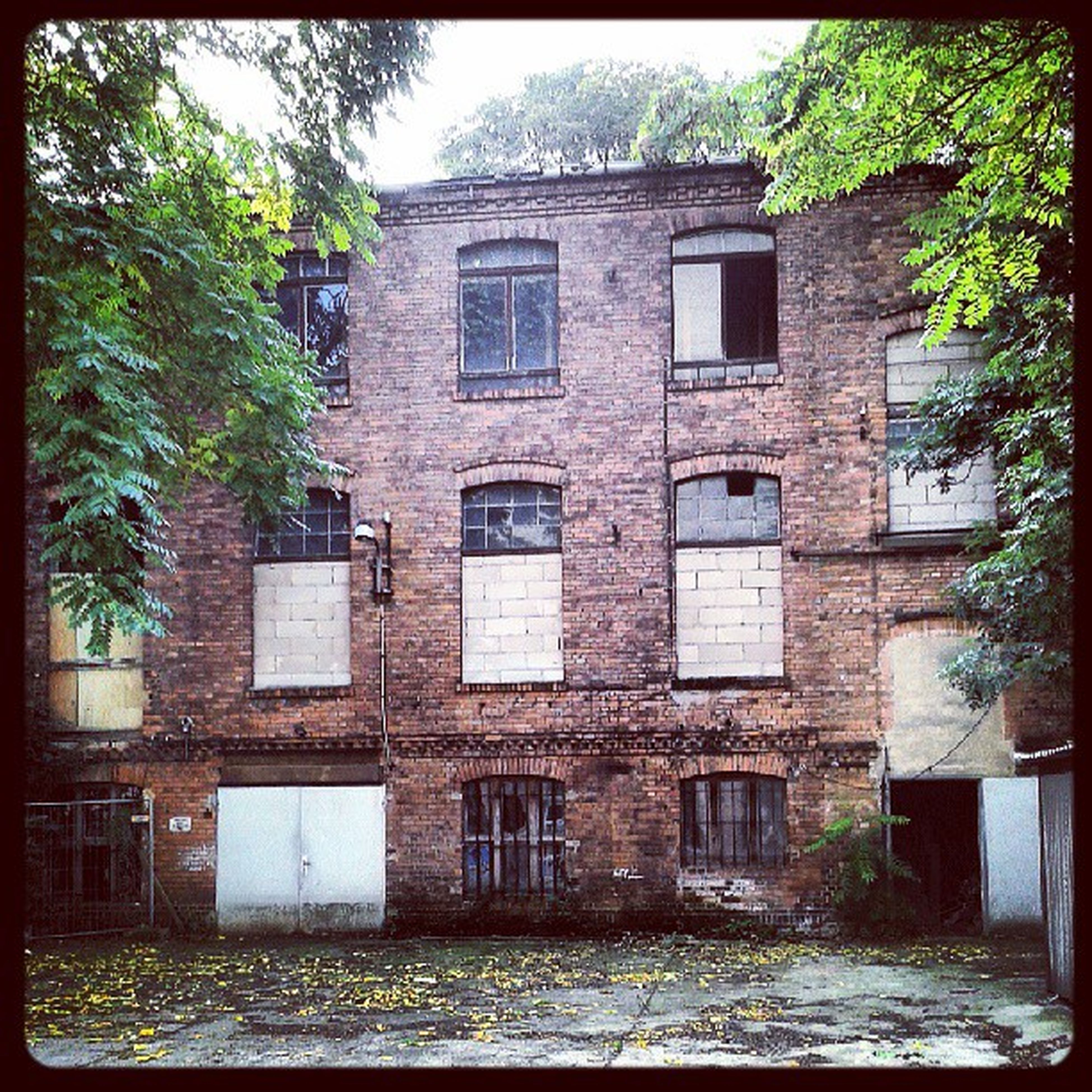 building exterior, architecture, built structure, transfer print, window, tree, auto post production filter, house, residential building, residential structure, old, building, day, abandoned, outdoors, no people, brick wall, growth, weathered, facade