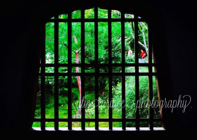 京都は嵐山 天龍寺にて。 Green Kyoto Japan Temple Japan Photography Bestoftheday Vscocam Worldwide_shot 京都 嵐山 일본 소통 교토 EyeEm Best Shots