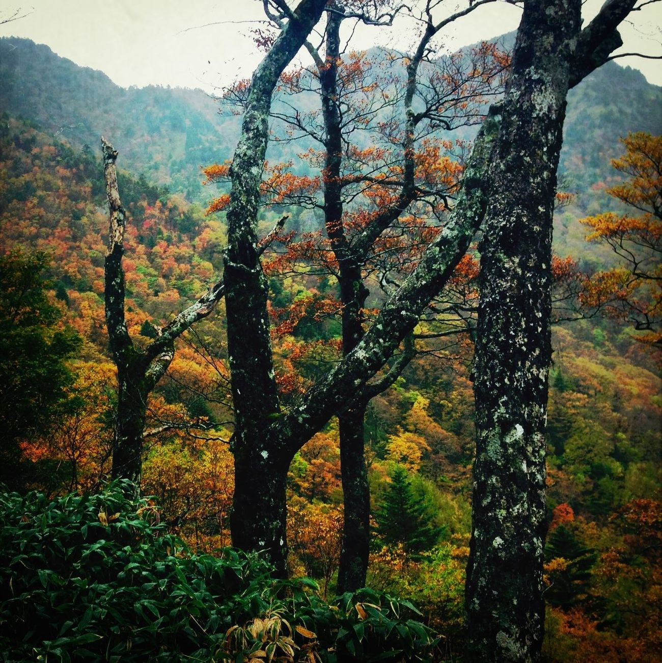 TreePorn Hiking IPhoneography Nature