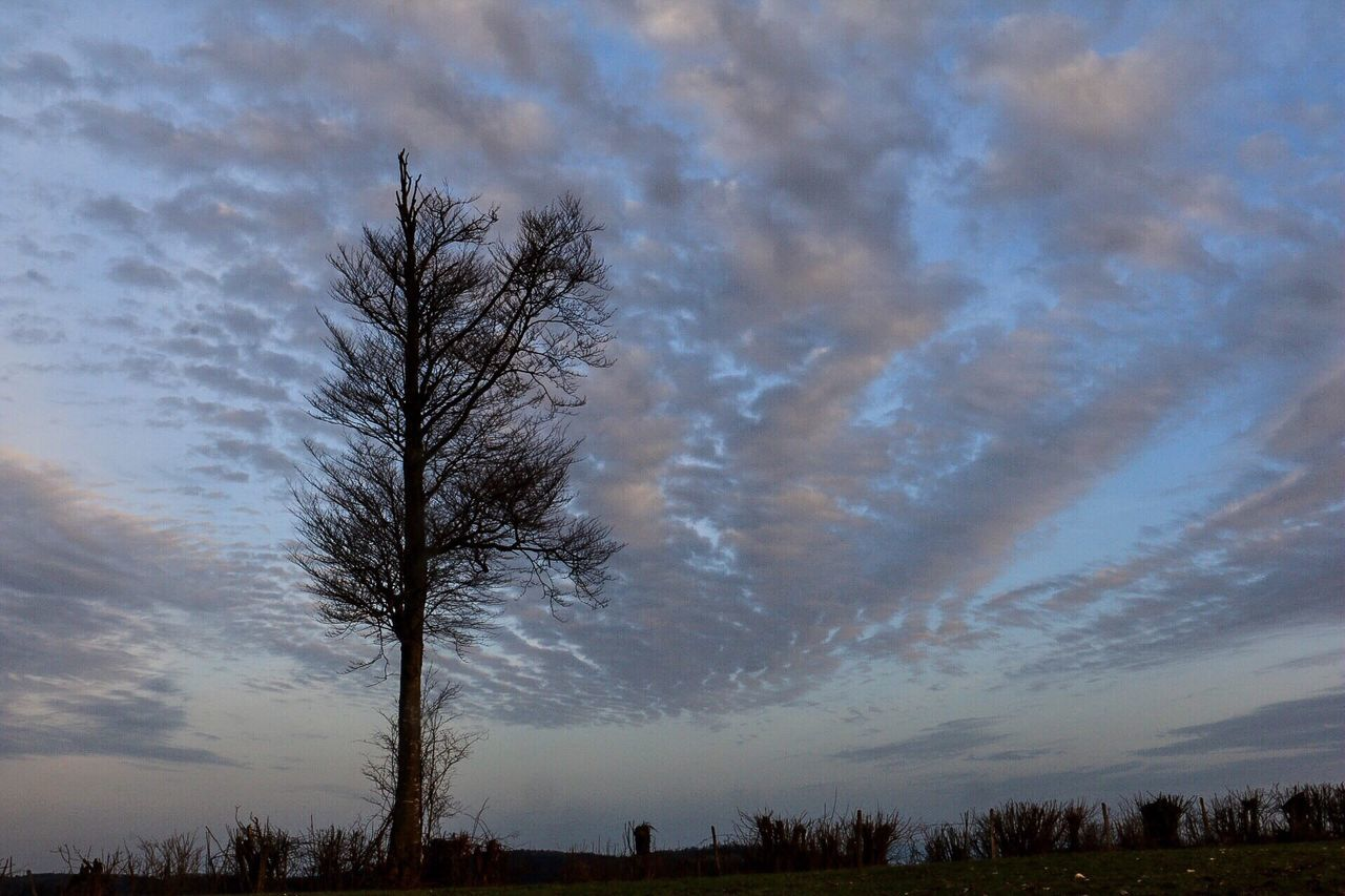 Tree Sky Beauty In Nature Tranquil Scene Outdoors