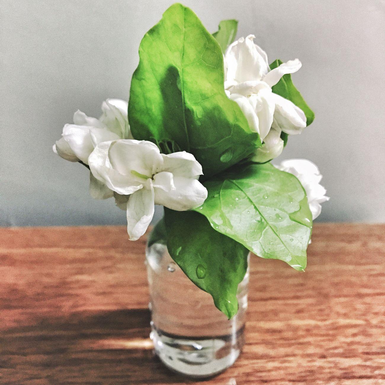 Canton Flower Jasmine Jasmine Flower Mother's Day Water