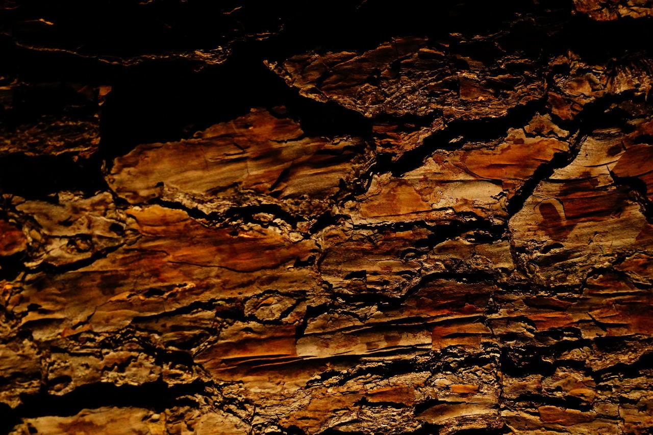 textured, backgrounds, no people, full frame, tree trunk, bark, rough, close-up, pattern, nature, night, outdoors, tree