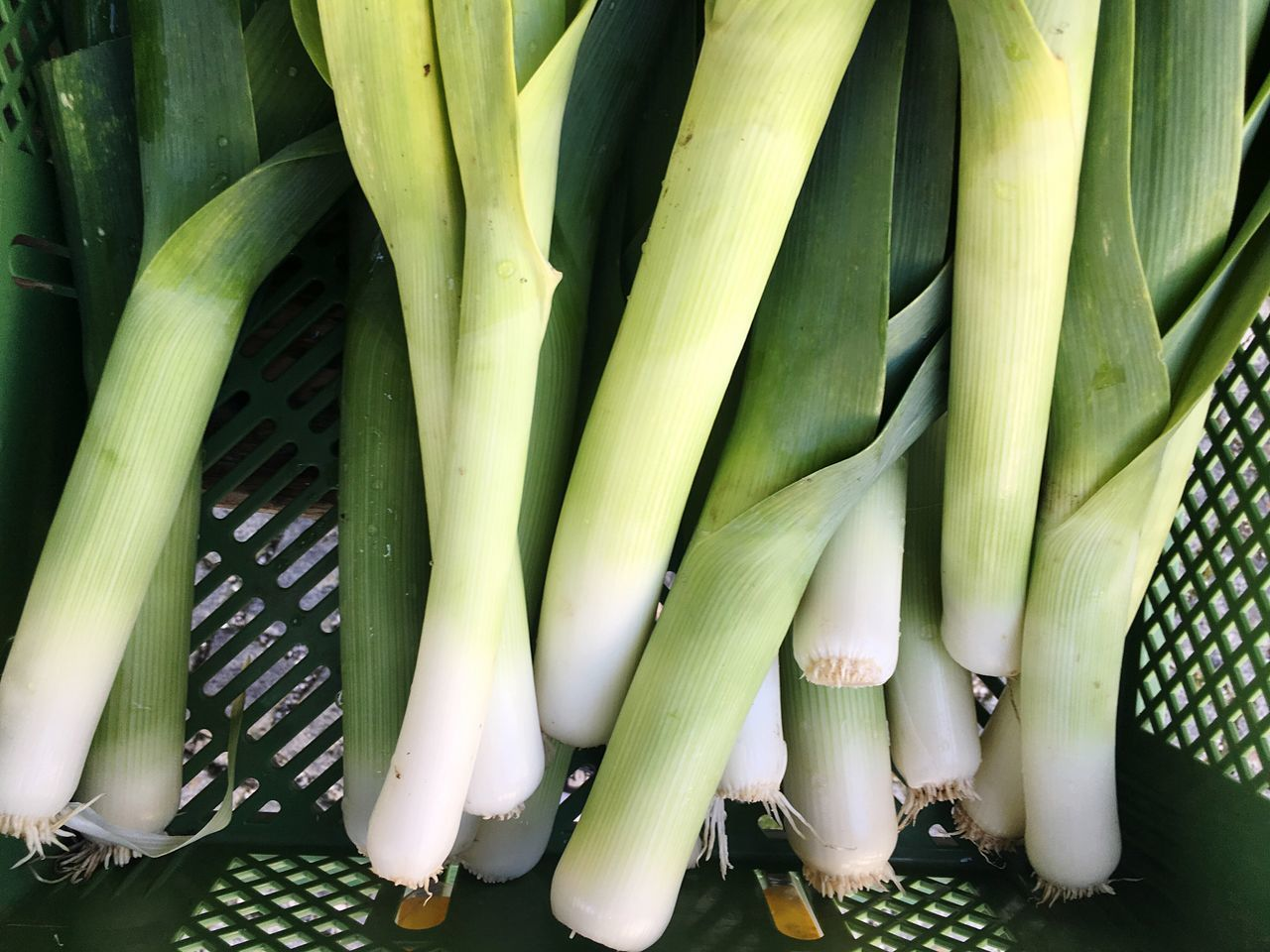 Leek Lauch Vegetables