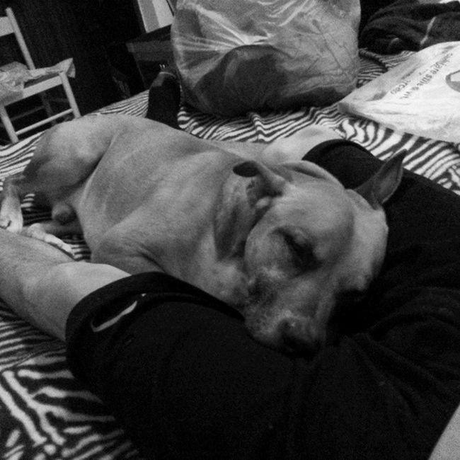 Io dormo bene solo quando sto insieme al mio babbo....SGRAMMA Kio SgrammaeKio Sevenyears SETTEANNI SEMPREINSIEME SEMPREINGIRO SOLOAMOREALLOSTATOPURO