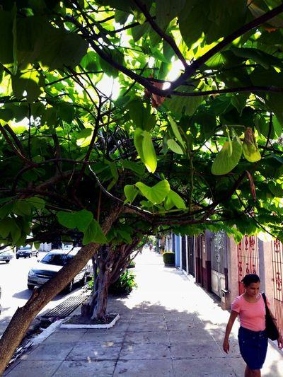 Na Bernal do Couto, um tufo de sombra.