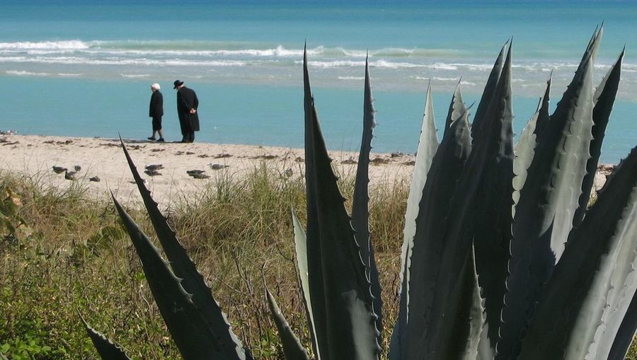 Atlantic Beach Florida Sea Shore Together Tranquil Scene Tranquility Walking Together Water Agave