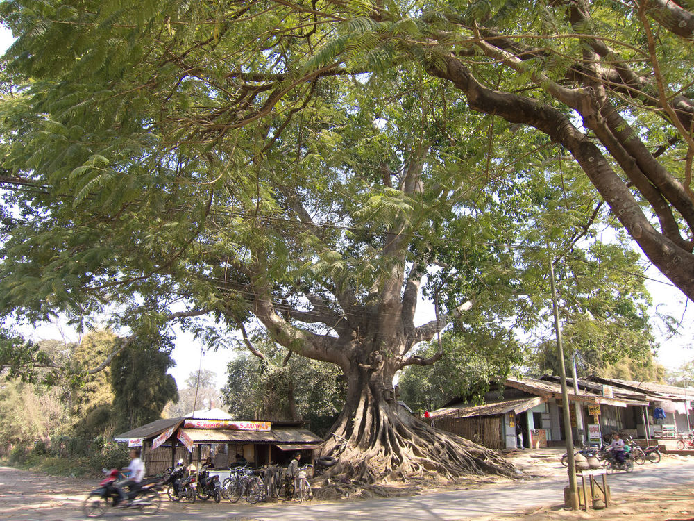 Green Color Nature Pause Pyin Oo Lwin Pyinoolwin Rest Shade Town Tree