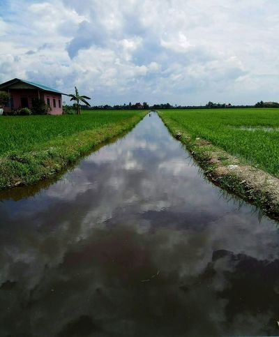 peacefulness.. Peace And Quiet Agriculture Cloud - Sky Water River View Reflection Outdoors Nature Day Sky Paddy Field Architecture Rural Scene Green Beauty In Nature