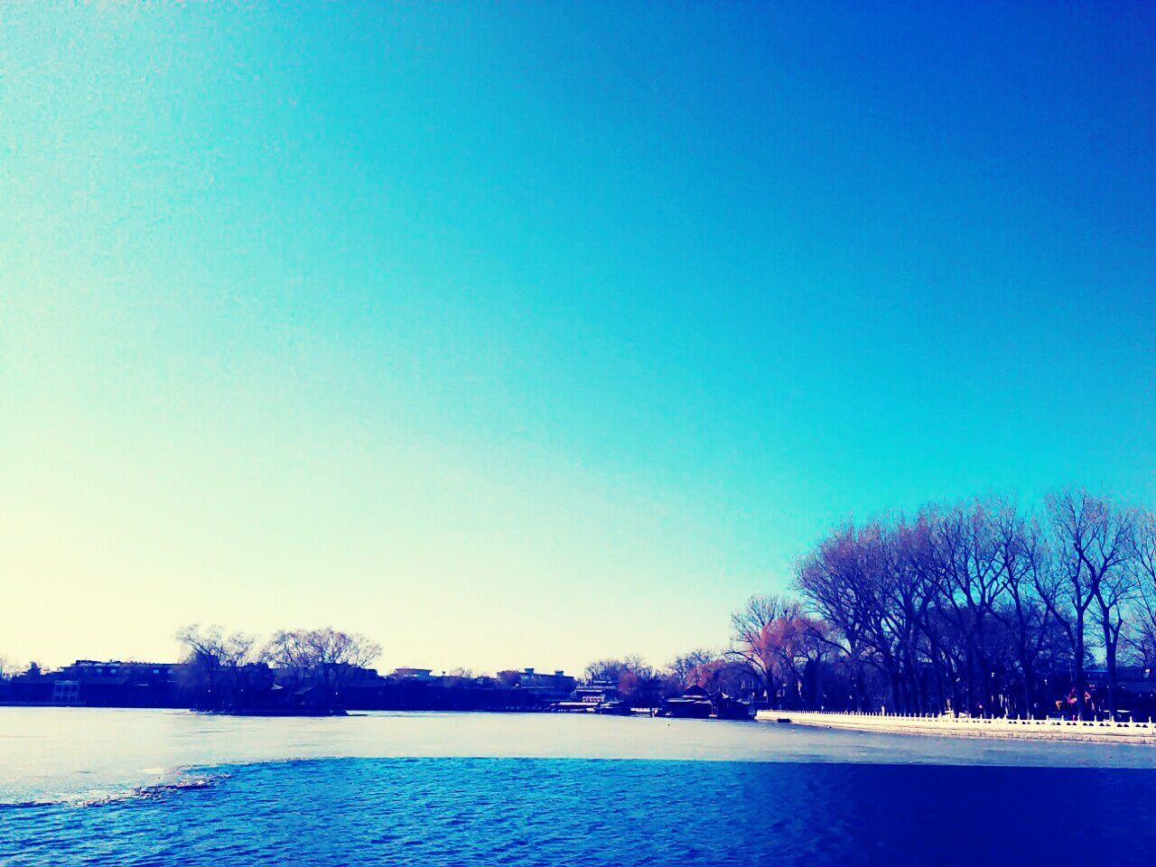 tree, clear sky, blue, copy space, lake, tranquil scene, scenics, tranquility, nature, outdoors, water, beauty in nature, no people, sky, landscape, day, view into land