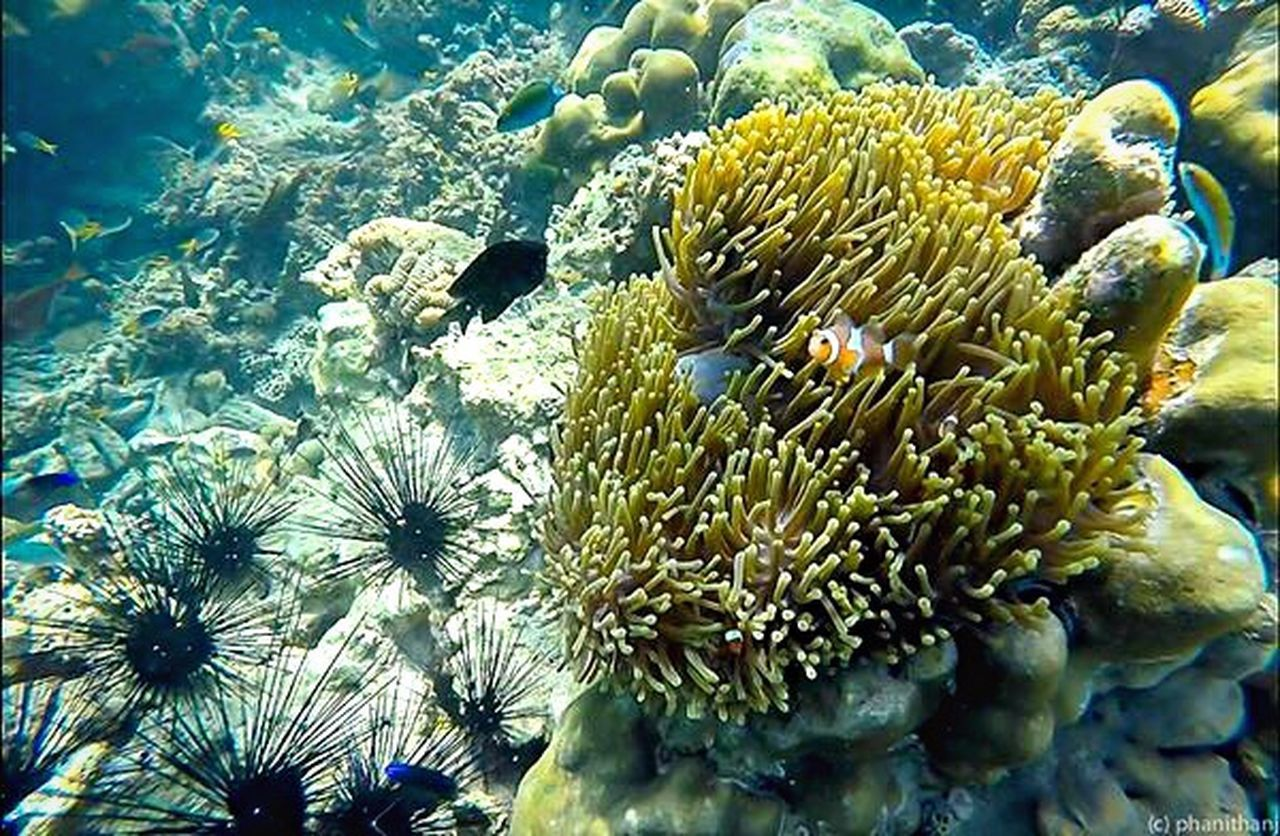 underwater, undersea, coral, sea, reef, sea life, nature, no people, water, clown fish, sea anemone, animals in the wild, animal themes, beauty in nature, outdoors, day