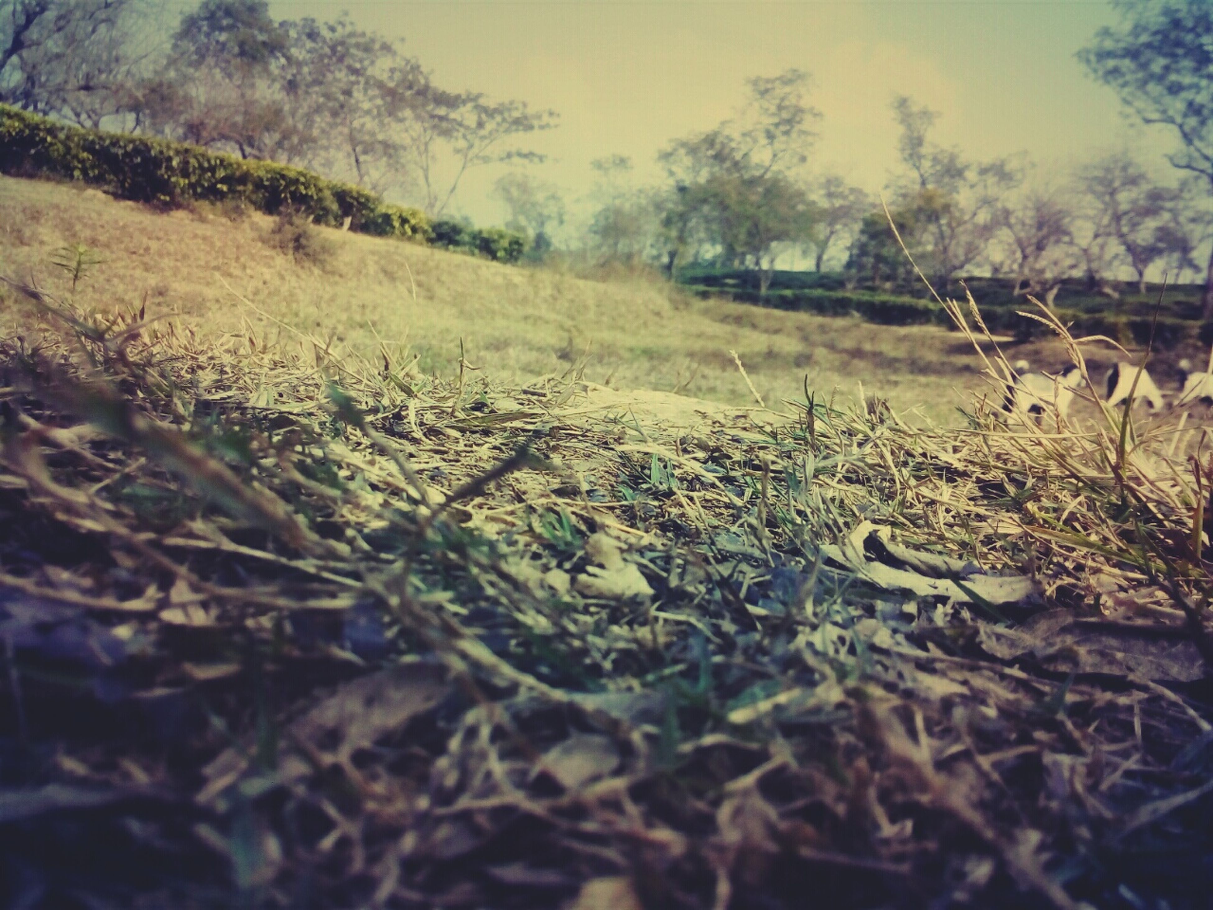 tranquility, field, nature, tree, dry, surface level, grass, tranquil scene, landscape, selective focus, growth, plant, leaf, forest, outdoors, beauty in nature, day, fallen, no people, sunlight