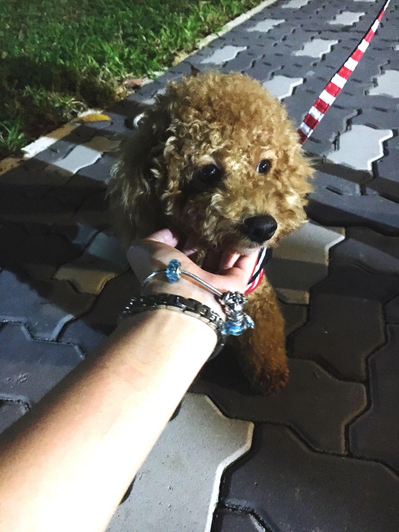 Cute dog 😍😍😍