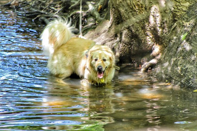 No People Animal Themes One Animal Water Dog Tranquility Outdoors Creekside Photography EyeEm Nature Lover Background Eyeemphotography EyeEmEyeEm Animal Lover EyeEm Gallery Creekside Trail Louisville, Kentucky My Favorite Place