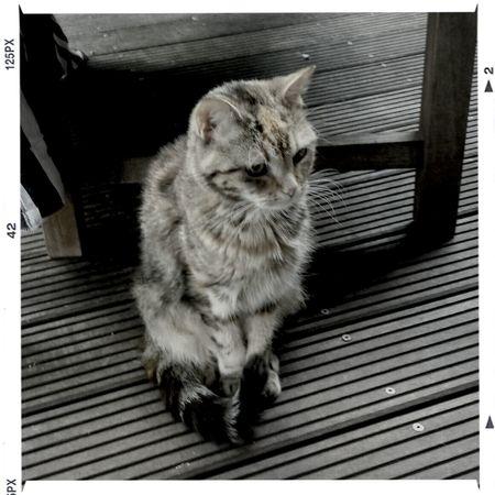Cat Blackandwhite Photography