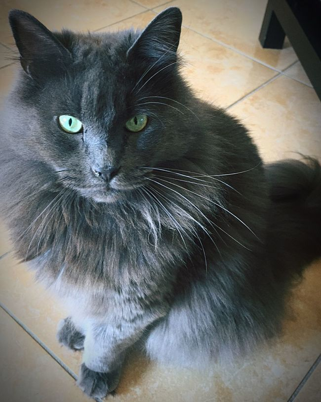 Zufolo Cat♡ Cat Cats Gatto😸 Cat Lovers Gatto Felino Felinos Chat