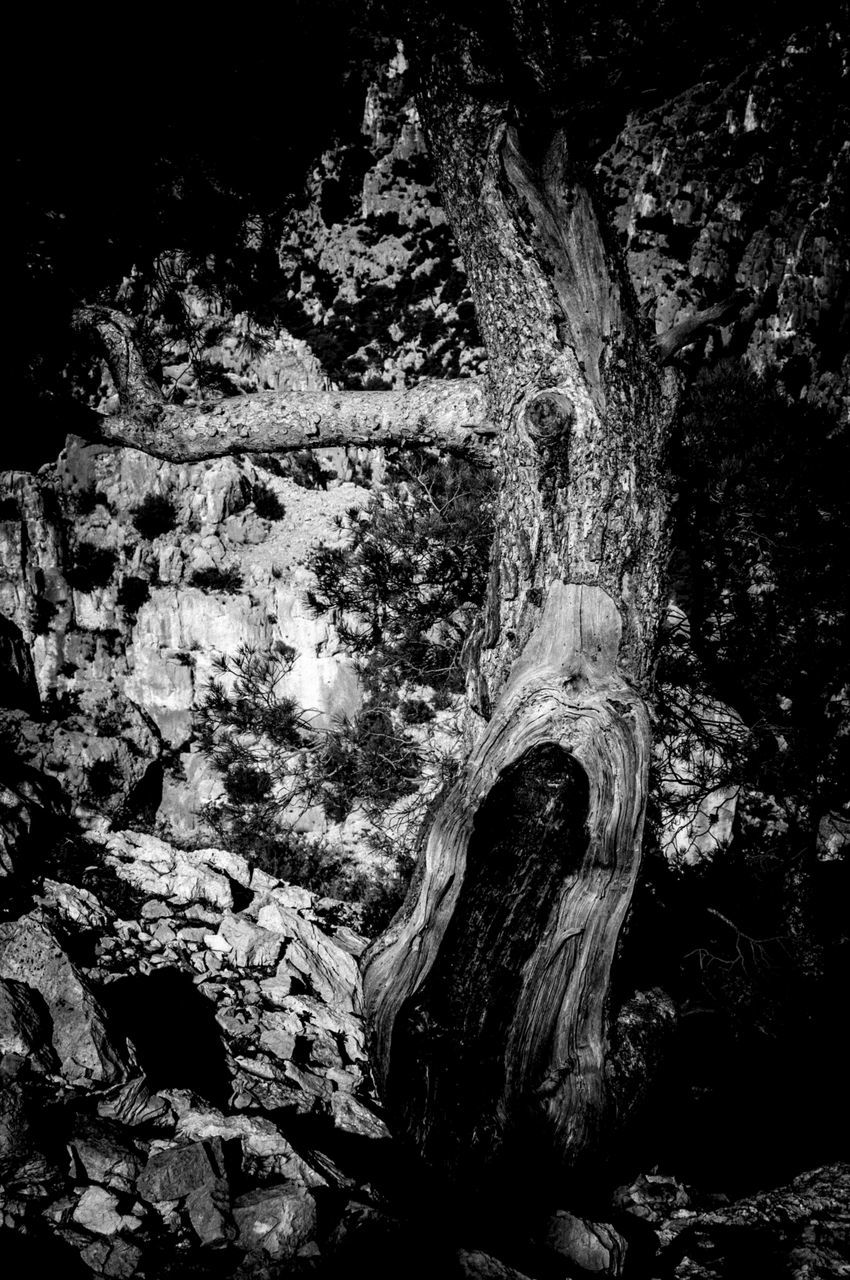 rock - object, tree trunk, tree, textured, no people, nature, rough, day, cave, growth, beauty in nature, outdoors, close-up, water