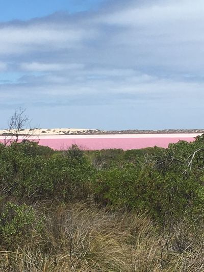 Beauty In Nature Outdoors Water Pink Lagoon Western Australia