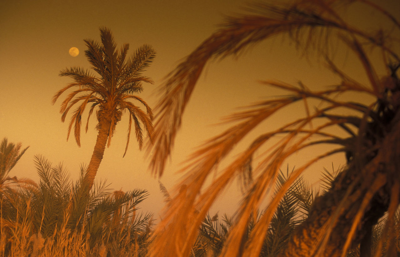 Beach Focus On Foreground Glowing Growing Growth Majestic Mixed Age Range Nature Outdoors Palm Tree Plant Relaxation Sand Sea Shore Summer Tranquil Scene Tropical Climate Vacations