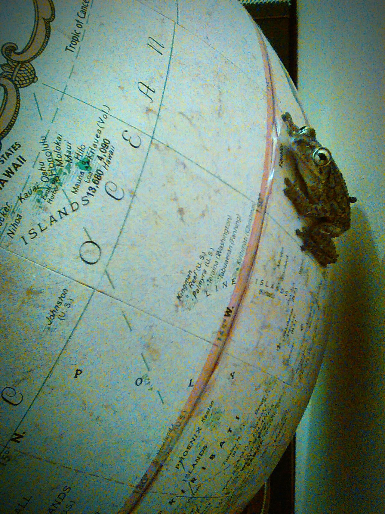 Frog heading toward the ocean Taking Over The World Seeing The World Differently Frog On Top Of The World Globetrotter Save The World Close-up Ice Age Seeing The World Check This Out Animal Themes World Traveller World Frog Perspective Out Of This World Out Of The Ordinary King Of The World Silly Outside Inside Outsider FUNNY ANIMALS Reptile Reptile World Amphibian Globe