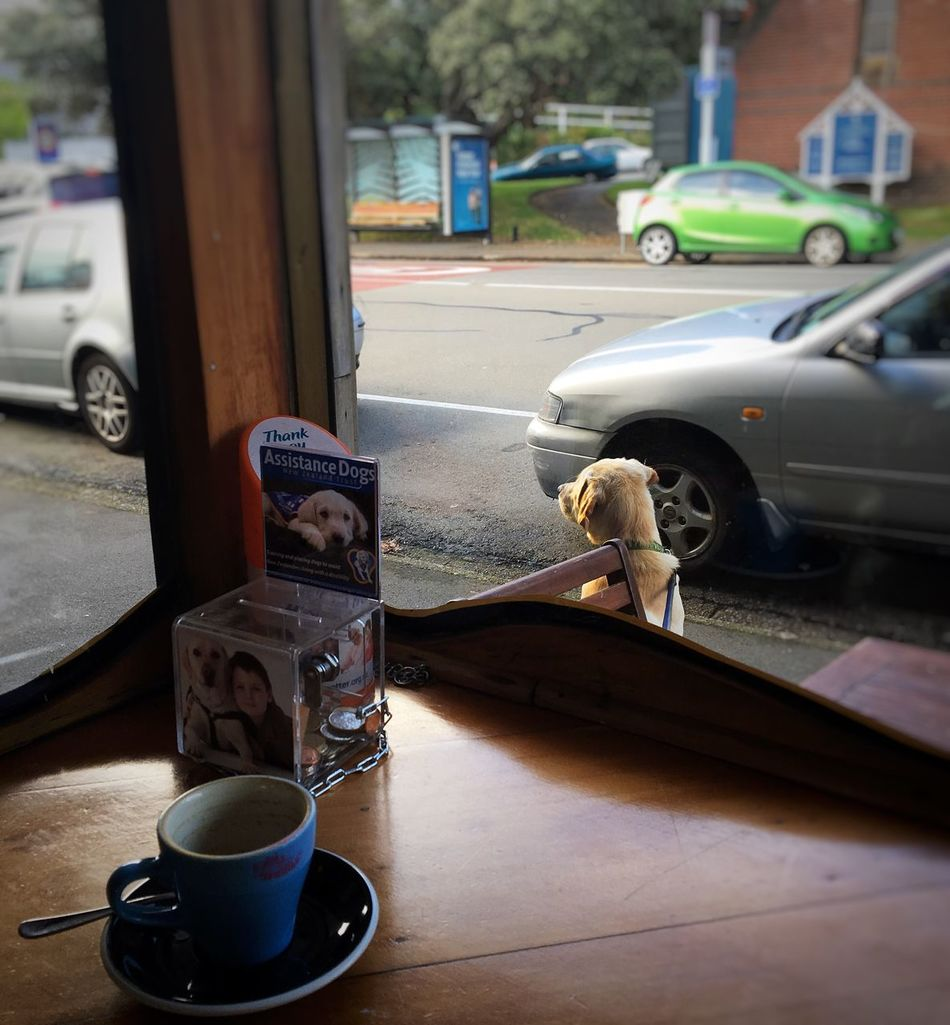 Morning routines. Dog Streetphotography Cafe Coffee Wellingtoncafes