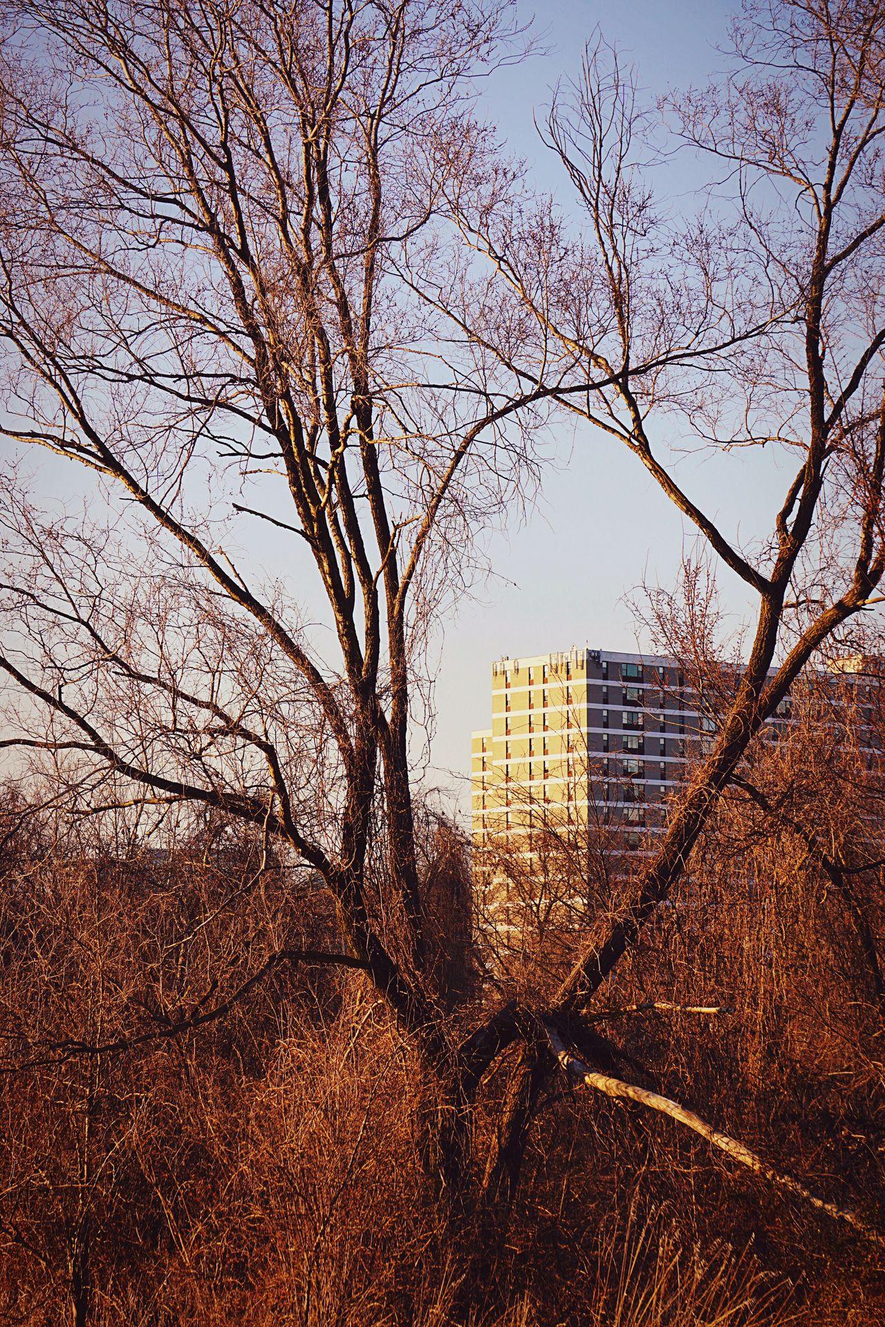Peeking Alexandria, VA Trees Condo Apartments City Life Small City Life Peeking Peeking Through At The Park