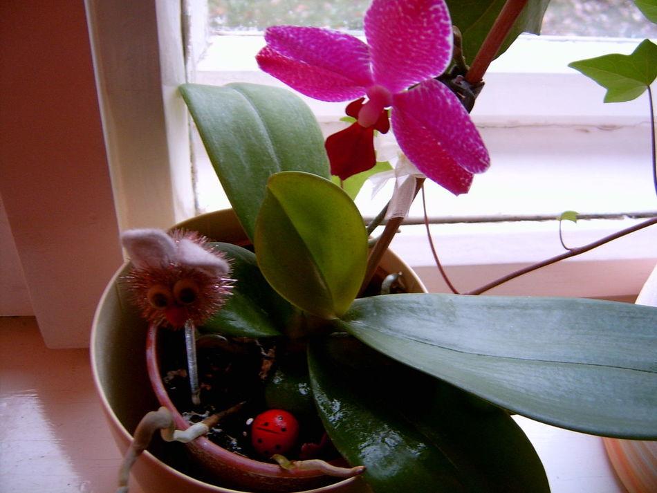 Flower Flower Head In The Window Nature Orchid Plant Purple Purple Flower Rabbit