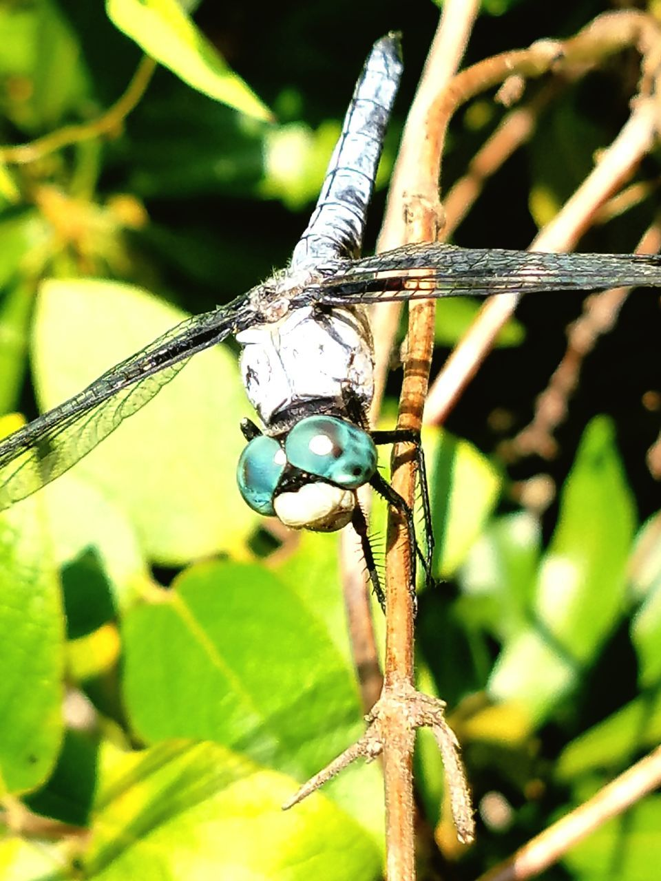 one animal, animal themes, insect, animals in the wild, close-up, animal wildlife, no people, green color, day, outdoors, nature, damselfly