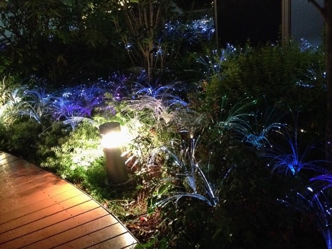 night, illuminated, glowing, no people, plant, celebration, tree, outdoors, nature, grass, close-up